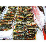 Soft Shell Crab in Myanmar
