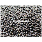 Myanmar Fresh Black Matpe