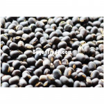 Black Matpe Bean from Myanmar