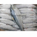 Hilsa Fish in Pathein