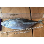 Offer China Frozen Horse Mackerel/ Scad (Trachurus Japonicus) for sale