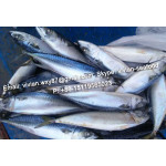 Offer China Frozen Pacific Mackerel/ Chub mackerel (Scomber Japonicus ) for sale