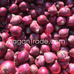 Red Onion from Myanmar