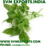 Tulsi Leaves Exporters India