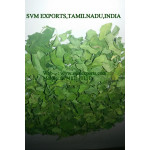 SVM EXPORTS INDIA Moringa Dry Leaves Exporters