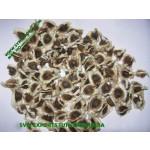 Organic Moringa PKM1 Seed Exporters