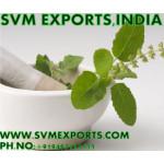 Ocimum Sanctum Leaves manufacturers