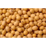 Soya Beans/ Soybeans for sale